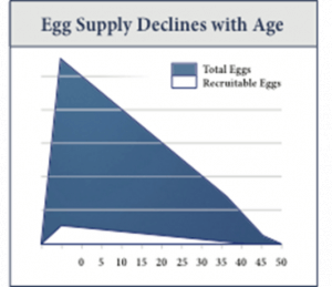 Egg Supply Chart